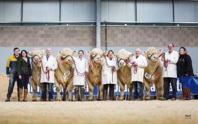 Stirling Bull February 2018 Sale