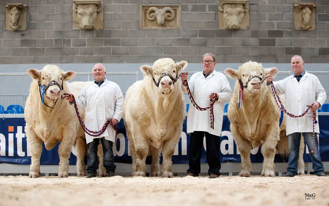 Review of the 2019 Stirling Bull Sale